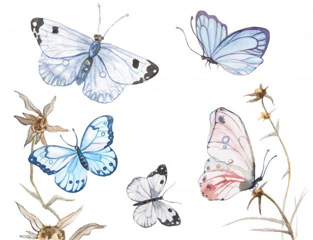 داستان پروانه و پیله برای کودکان + ترجمه